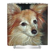 Paco The Papillion Shower Curtain