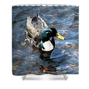 Paddling Peacefully Shower Curtain