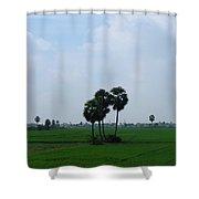 Paddy Fields Near Anantapur, Andhra Pradesh, India Shower Curtain