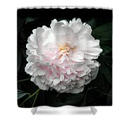 Paeon Shower Curtain
