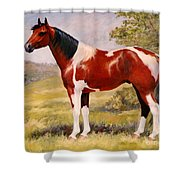 Paint Horse Gelding Portrait Oil Painting - Gizmo Shower Curtain
