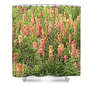 Paintbrush Beauties Shower Curtain