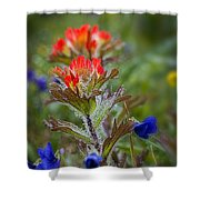 Paintbrush In The Mist Shower Curtain