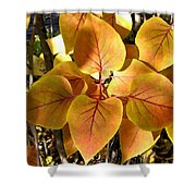 Painted Autumn Lilac Shower Curtain