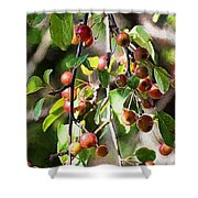 Painted Berries Shower Curtain