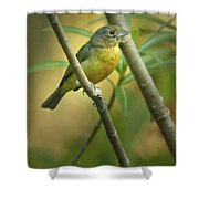 Painted Bunting Female Shower Curtain