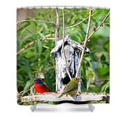 Painted Buntings Shower Curtain