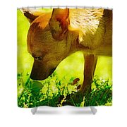 Painted Chihuahua  Shower Curtain