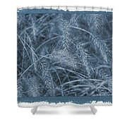 Painted Cyanotype Golden Wheat Shower Curtain