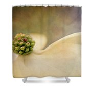 Painted Dogwood Shower Curtain