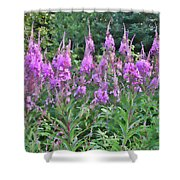 Painted Fireweed Shower Curtain