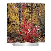 Painted Forest Shower Curtain