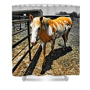 Painted Horse Shower Curtain