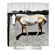 Painted Horse II Shower Curtain