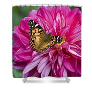 Painted Lady On Dahlia Shower Curtain