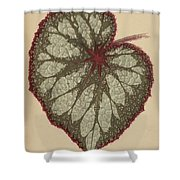 Painted Leaf Begonia Shower Curtain