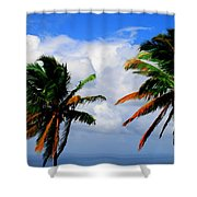 Painted Palm Trees Shower Curtain