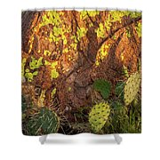 Painted Rock Shower Curtain