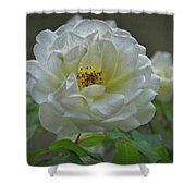 Painted Spring Camilia Shower Curtain