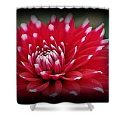 Painted Tips Shower Curtain