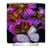 Painted Tongue With White Butterfly Shower Curtain