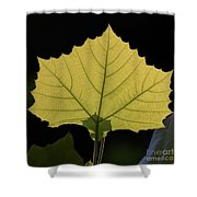 Painted Translucence Shower Curtain