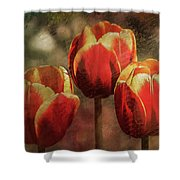 Painted Tulips Shower Curtain by Richard Ricci