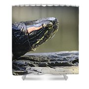 Painted Turtle Shower Curtain