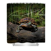 Painted Turtle Sunning Itself On A Log Shower Curtain