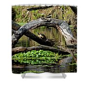 Painted Turtles Shower Curtain