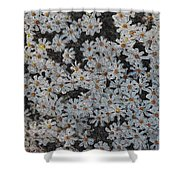 Painted White Daisies Shower Curtain