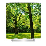 Painting-like Photo Of A Rural Lawn Shower Curtain