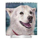 Painting Of A White And Furry Alaskan Malamute Shower Curtain