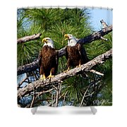 Pair Of American Bald Eagle Shower Curtain