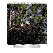 Pair Of Bald Eagles In Nest Shower Curtain