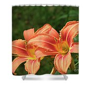 Pair Of Blooming Orange Lilies In A Garden Shower Curtain