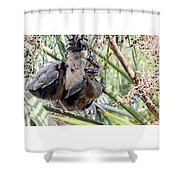 Pair Of Boat Billed Night Herons Share A Joke Shower Curtain