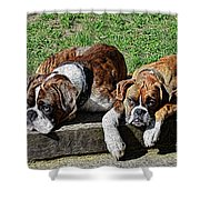 Pair Of Boxers Shower Curtain