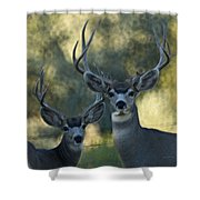 Pair Of Bucks Shower Curtain