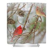 Pair Of Cardinals Shower Curtain