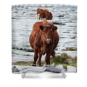Pair Of Cows Grazing On The Burren In Ireland Shower Curtain