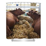 Pair Of Cows Shower Curtain