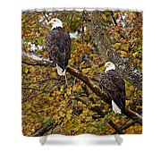 Pair Of Eagles In Autumn Shower Curtain