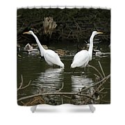 Pair Of Egrets Shower Curtain by George Randy Bass