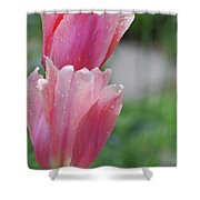Pair Of Flowering Pink Tulips With Dew Drops Shower Curtain