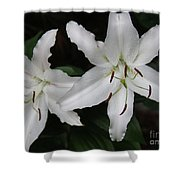 Pair Of Flowering White Stargazer Lilies In Bloom Shower Curtain