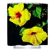 Pair Of Golden Hibiscus In Morning Sun Shower Curtain