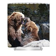 Pair Of Grizzly Bears Biting At Each Other Shower Curtain