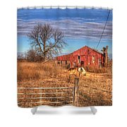 Pair Of Horses Grazing In A Field Shower Curtain
