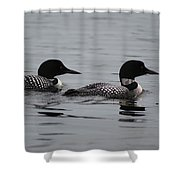 Pair Of Loons Shower Curtain